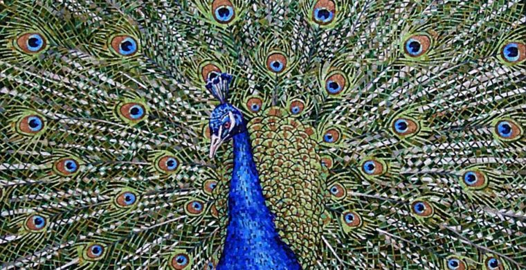 PEACOCK, INZINO, BRESCIA, ITALY, PRIVATE COLLECTION